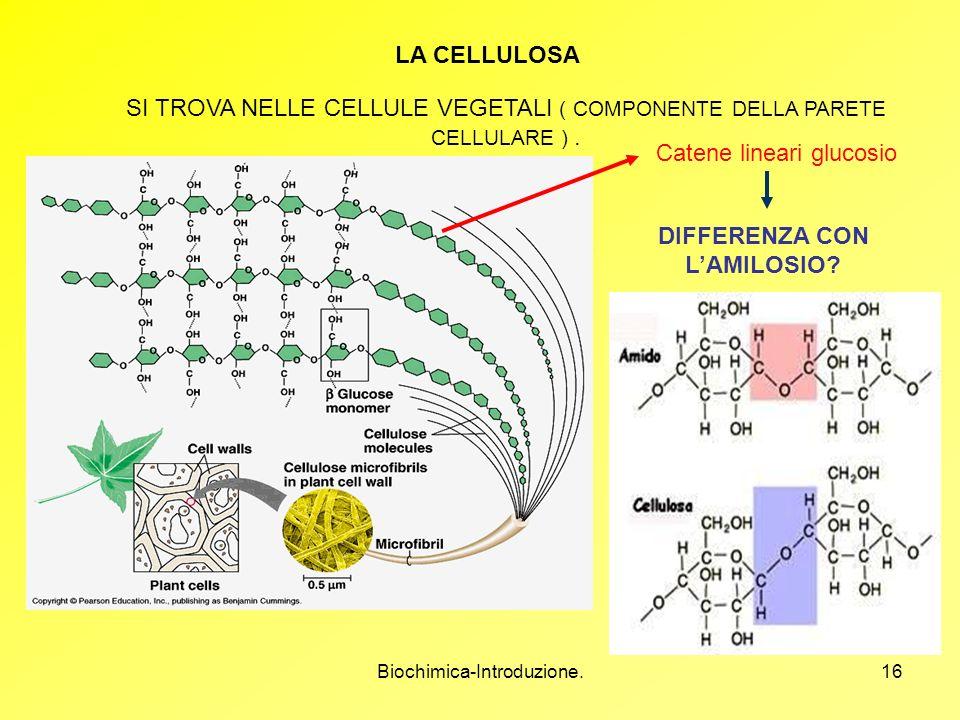 Biochimica-Introduzione.16 LA CELLULOSA SI TROVA NELLE CELLULE VEGETALI ( COMPONENTE DELLA PARETE CELLULARE ). Catene lineari glucosio DIFFERENZA CON
