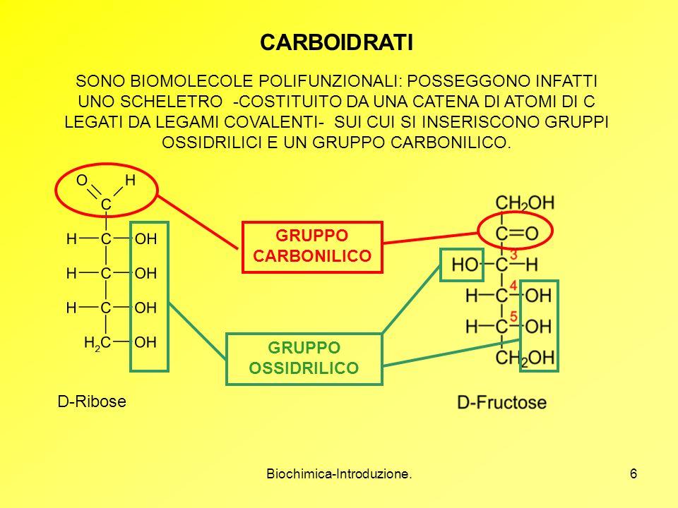 Biochimica-Introduzione.6 CARBOIDRATI SONO BIOMOLECOLE POLIFUNZIONALI: POSSEGGONO INFATTI UNO SCHELETRO -COSTITUITO DA UNA CATENA DI ATOMI DI C LEGATI
