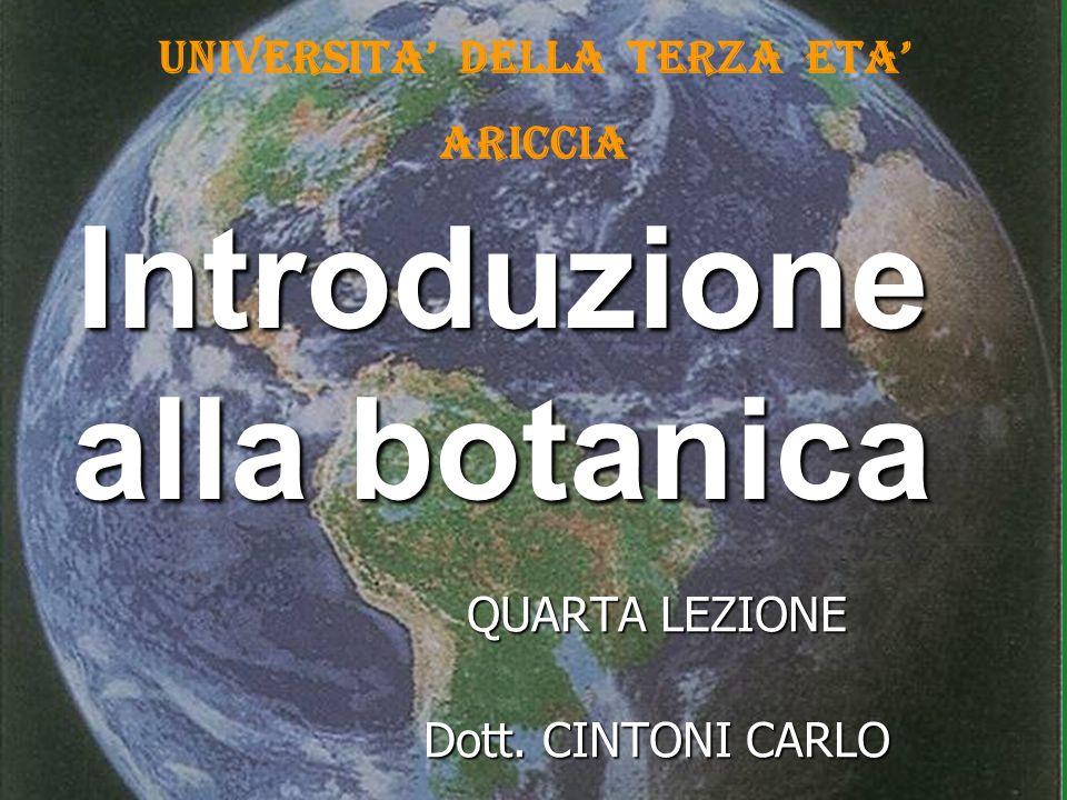 Introduzione alla botanica QUARTA LEZIONE Dott. CINTONI CARLO UNIVERSITA DELLA TERZA ETA ARICCIA