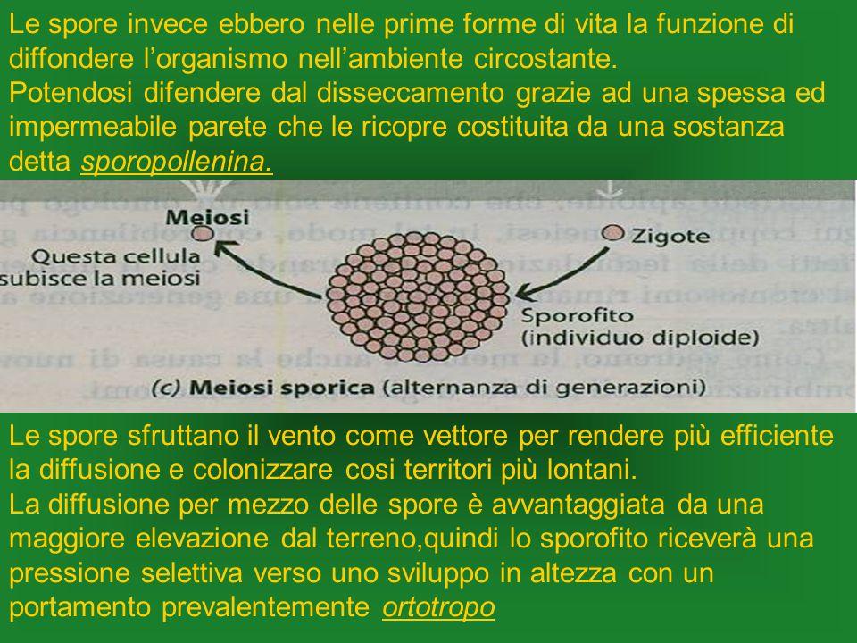 Le spore invece ebbero nelle prime forme di vita la funzione di diffondere lorganismo nellambiente circostante. Potendosi difendere dal disseccamento