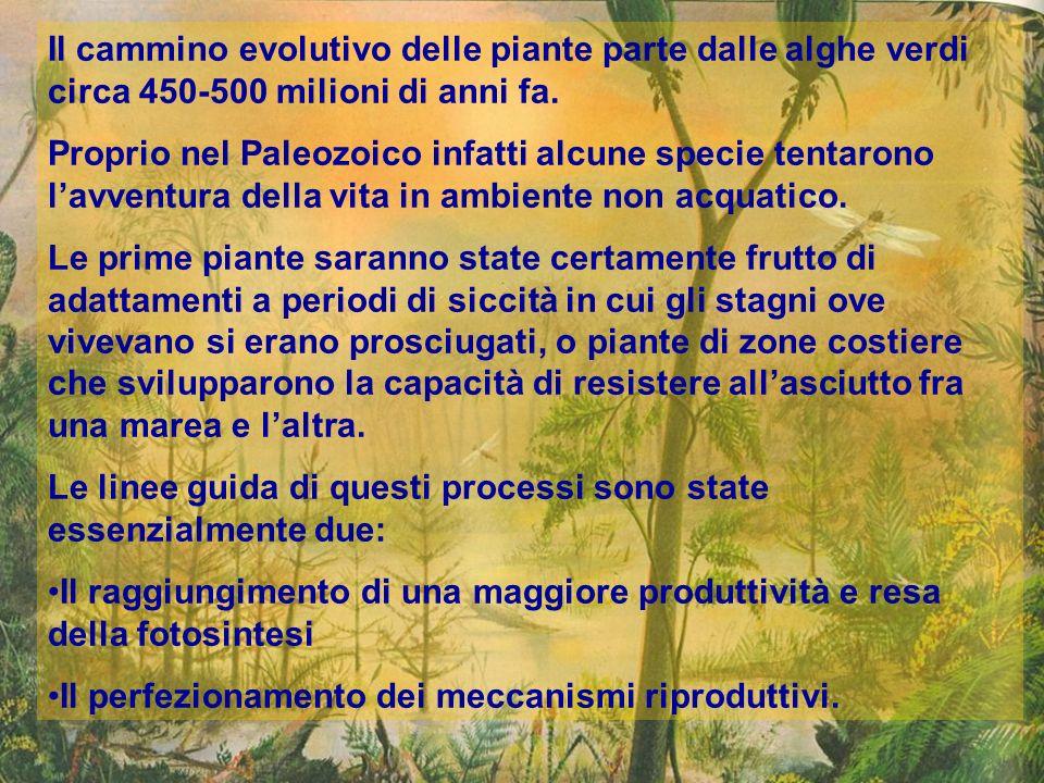 Il cammino evolutivo delle piante parte dalle alghe verdi circa 450-500 milioni di anni fa. Proprio nel Paleozoico infatti alcune specie tentarono lav