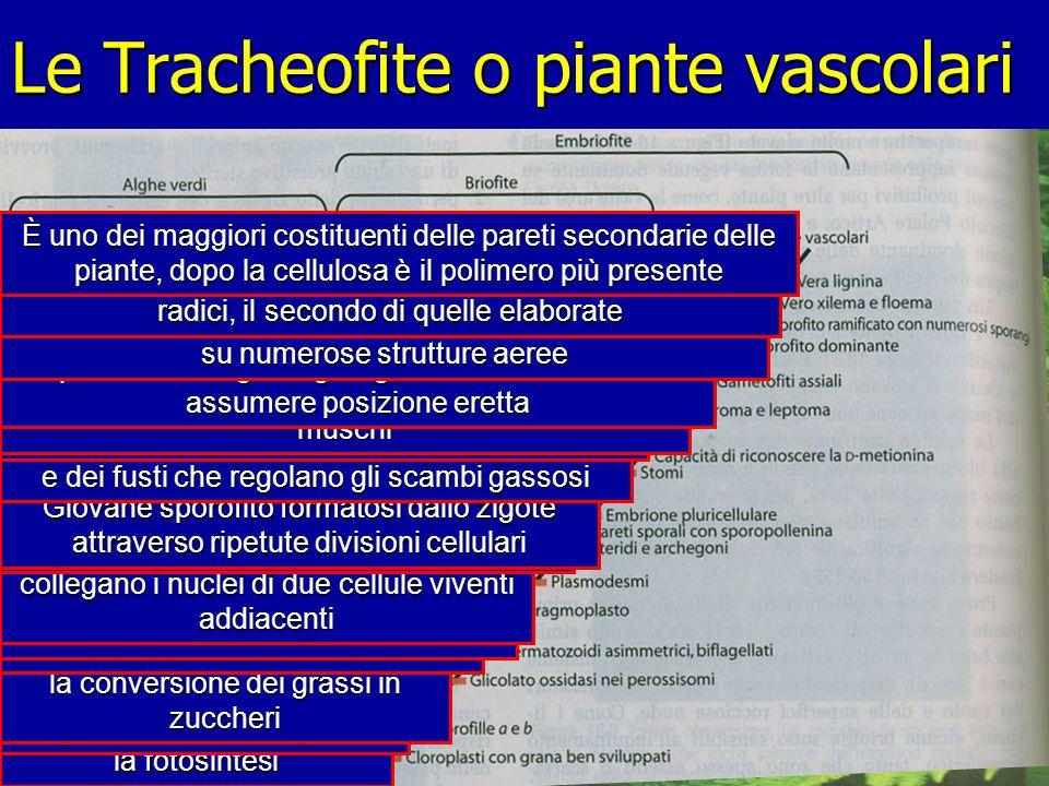 Le Tracheofite o piante vascolari Sono gli organi ove si svolge la fotosintesi Pigmenti verdi delle piante Organelli cellulari in cui avviene la conve