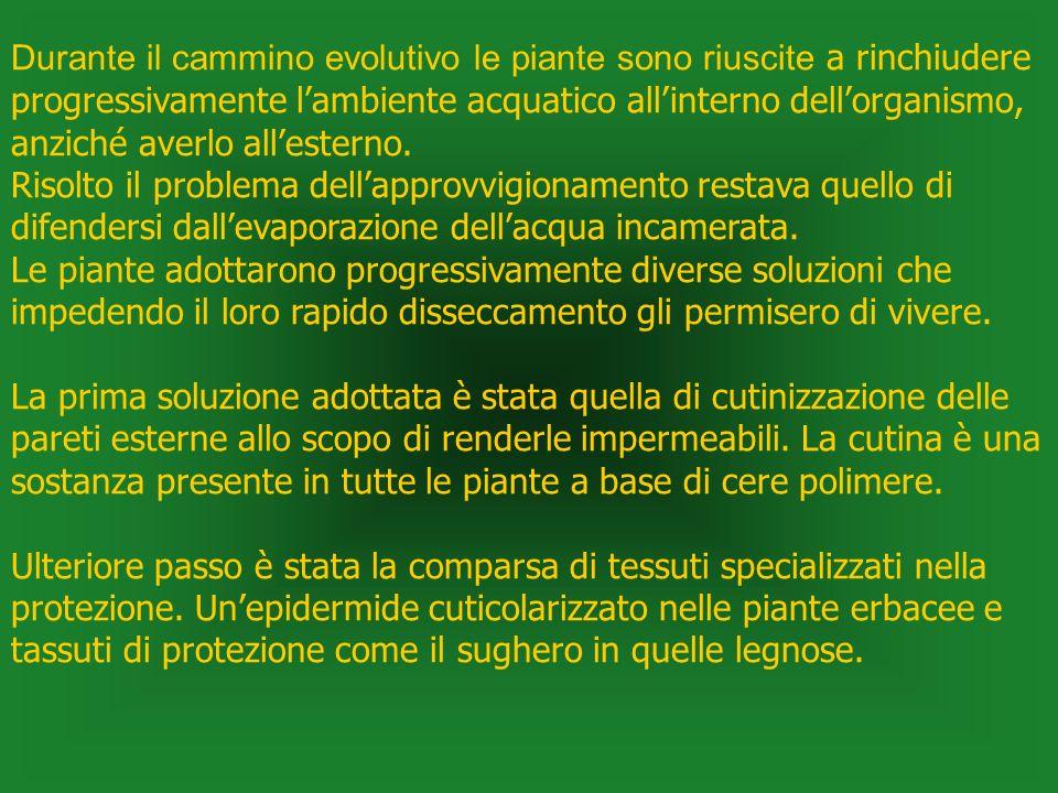 Durante il cammino evolutivo le piante sono riuscite a rinchiudere progressivamente lambiente acquatico allinterno dellorganismo, anziché averlo alles