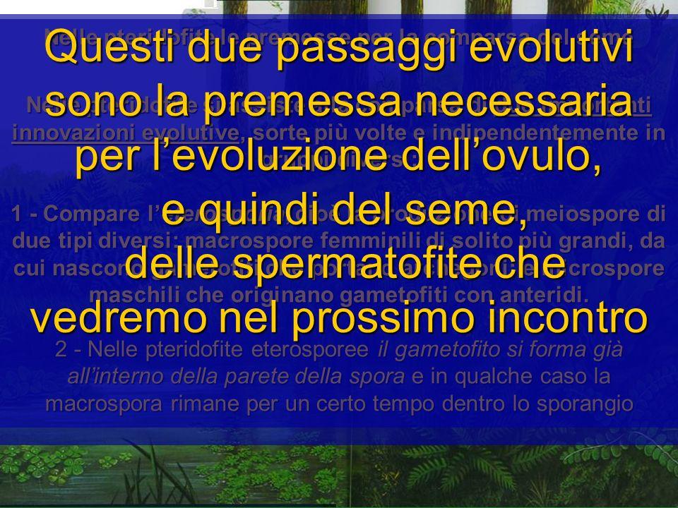 Nelle pteridofite le premesse per la comparsa del seme Nelle pteridofite si assiste alla comparsa di due importanti innovazioni evolutive, sorte più v