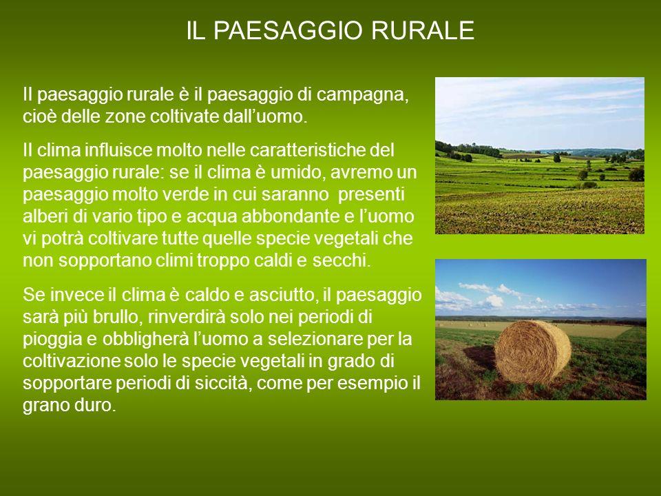 IL PAESAGGIO RURALE Il paesaggio rurale è il paesaggio di campagna, cioè delle zone coltivate dalluomo. Il clima influisce molto nelle caratteristiche