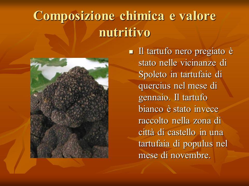 Composizione chimica e valore nutritivo Il tartufo nero pregiato è stato nelle vicinanze di Spoleto in tartufaie di quercius nel mese di gennaio. Il t