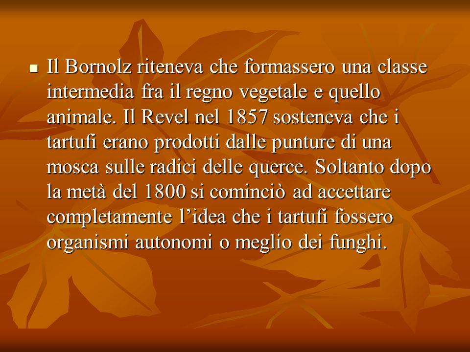 Il Bornolz riteneva che formassero una classe intermedia fra il regno vegetale e quello animale. Il Revel nel 1857 sosteneva che i tartufi erano prodo