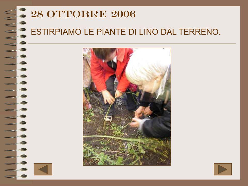 28 OTTOBRE 2006 ESTIRPIAMO LE PIANTE DI LINO DAL TERRENO.