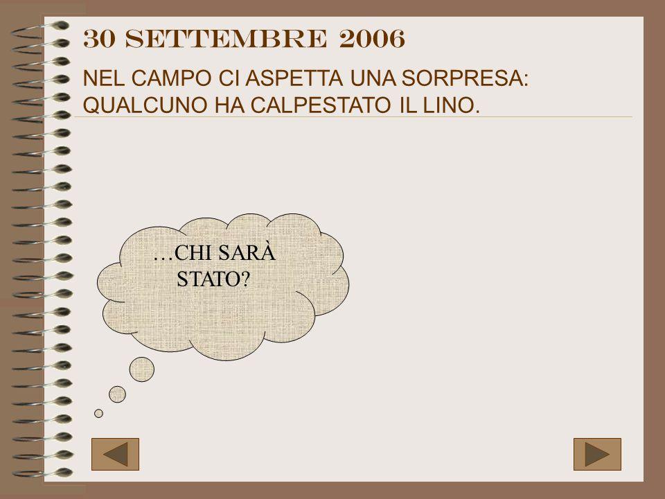 30 settembre 2006 NEL CAMPO CI ASPETTA UNA SORPRESA: QUALCUNO HA CALPESTATO IL LINO. …CHI SARÀ STATO?