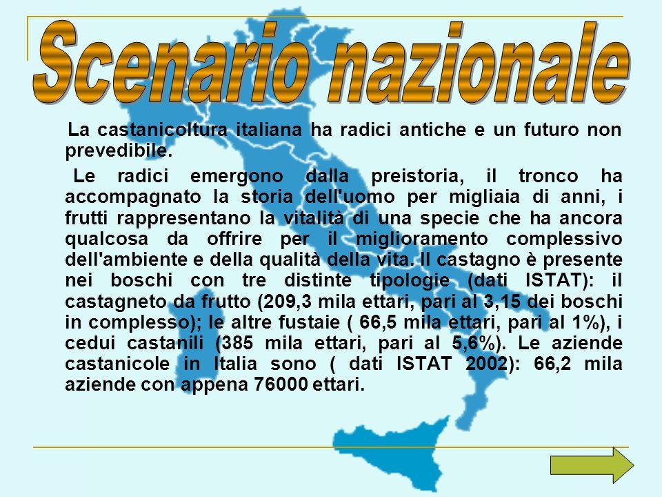 La castanicoltura italiana ha radici antiche e un futuro non prevedibile. Le radici emergono dalla preistoria, il tronco ha accompagnato la storia del