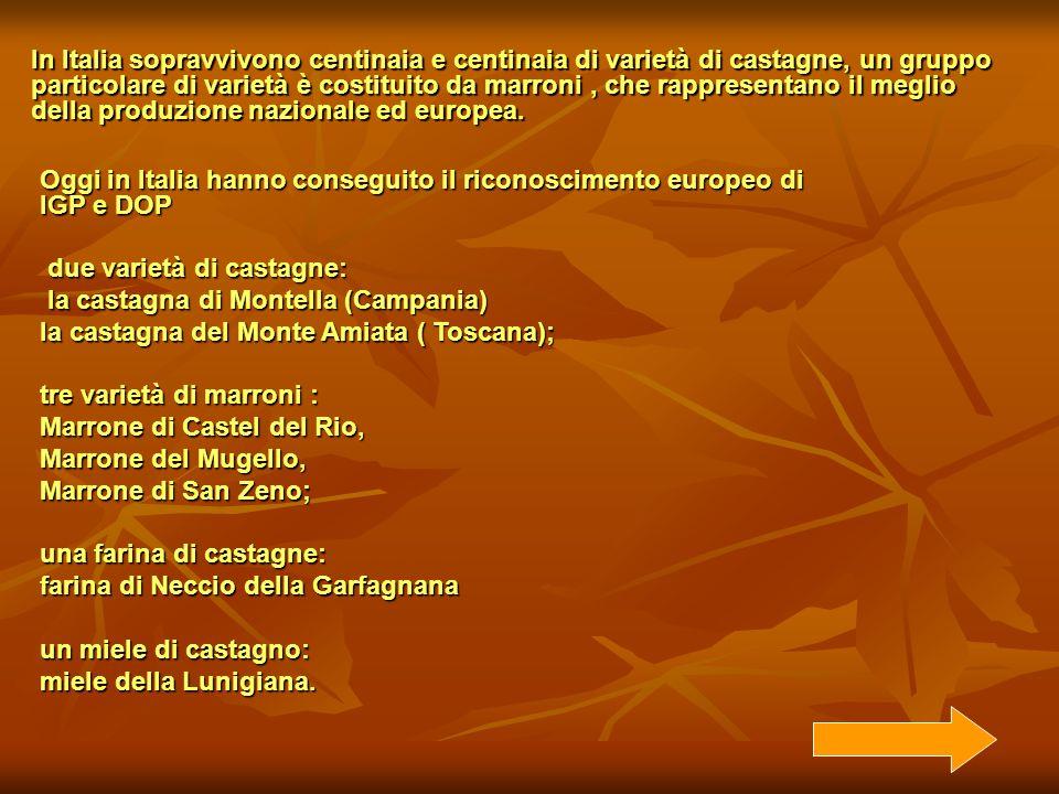 Oggi in Italia hanno conseguito il riconoscimento europeo di IGP e DOP due varietà di castagne: due varietà di castagne: la castagna di Montella (Camp