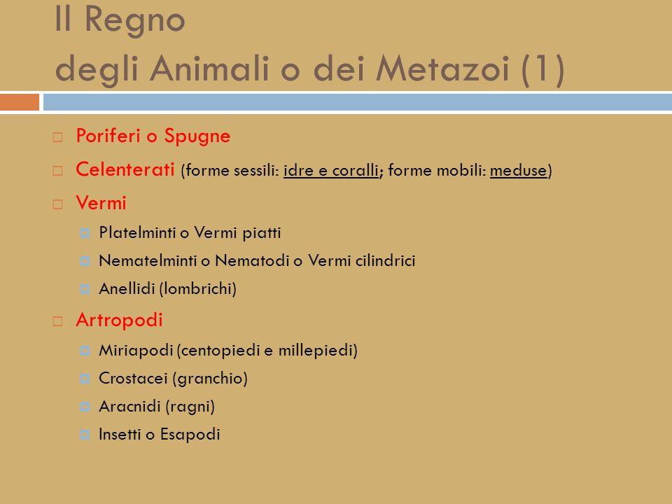 Il Regno delle PIANTE o dei VEGETALI ALGHE PLURICELLULARI BRIOFITE (Muschi ed Epatiche) TRACHEOFITE (piante dotate di sistemi vascolari per il traspor
