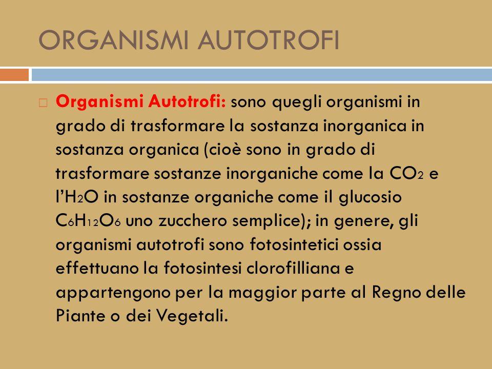 GLI ORGANISMI AUTOTROFI ED ETEROTROFI LUTILIZZO DELLENERGIA DA PARTE DEGLI ORGANISMI VIVENTI.