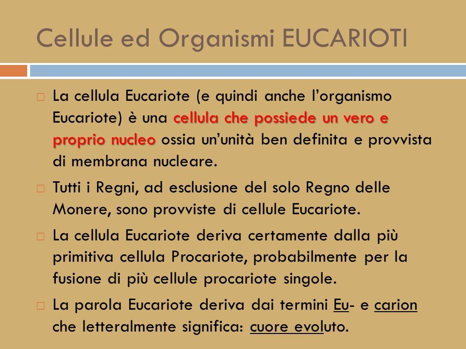Cellule ed Organismi PROCARIOTI cellula che non possiede un vero e proprio nucleo La cellula procariote (e di conseguenza anche lorganismo unicellular