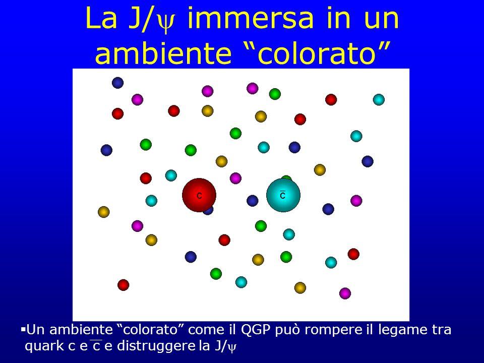 La J/ immersa in un ambiente colorato Un ambiente colorato come il QGP può rompere il legame tra quark c e c e distruggere la J/