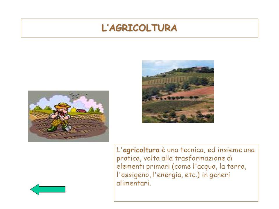 LAGRICOLTURA L'agricoltura è una tecnica, ed insieme una pratica, volta alla trasformazione di elementi primari (come l'acqua, la terra, l'ossigeno, l