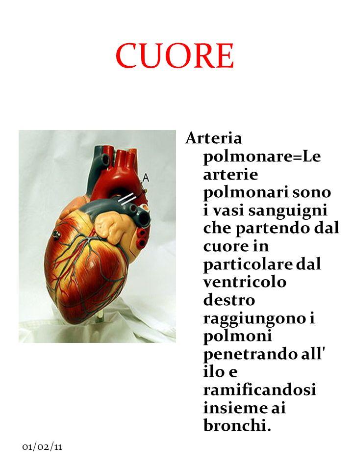 01/02/11 CUORE Arteria polmonare=Le arterie polmonari sono i vasi sanguigni che partendo dal cuore in particolare dal ventricolo destro raggiungono i