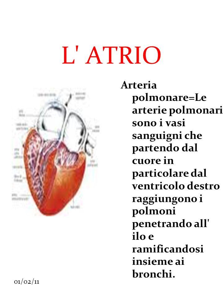 01/02/11 L' ATRIO Arteria polmonare=Le arterie polmonari sono i vasi sanguigni che partendo dal cuore in particolare dal ventricolo destro raggiungono