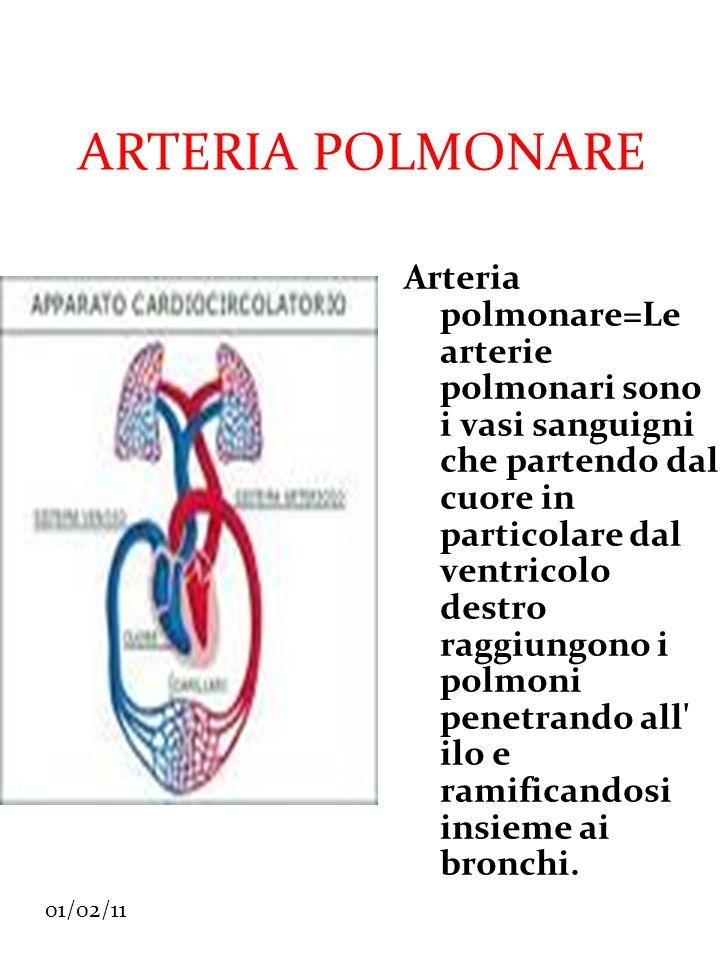 01/02/11 ARTERIA POLMONARE Arteria polmonare=Le arterie polmonari sono i vasi sanguigni che partendo dal cuore in particolare dal ventricolo destro ra