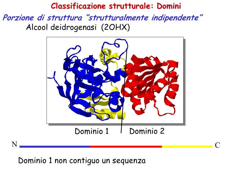 Classificazione strutturale: Domini Porzione di struttura strutturalmente indipendente Alcool deidrogenasi (2OHX) Dominio 1 Dominio 2 Dominio 1 non co