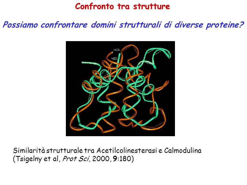 Confronto tra strutture Possiamo confrontare domini strutturali di diverse proteine? Similarità strutturale tra Acetilcolinesterasi e Calmodulina (Tsi