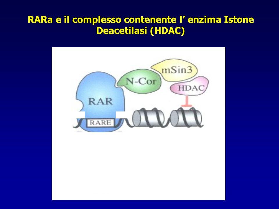 RARa e il complesso contenente l enzima Istone Deacetilasi (HDAC)