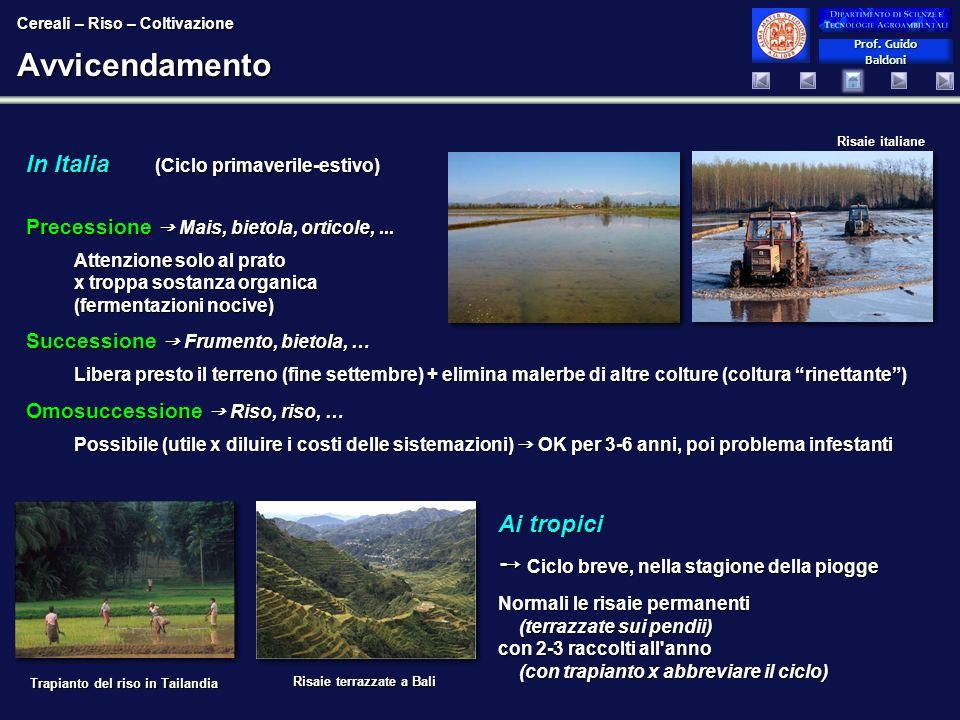 Prof. Guido Baldoni Prof. Guido BaldoniAvvicendamento In Italia (Ciclo primaverile-estivo) Risaie terrazzate a Bali Trapianto del riso in Tailandia Ri