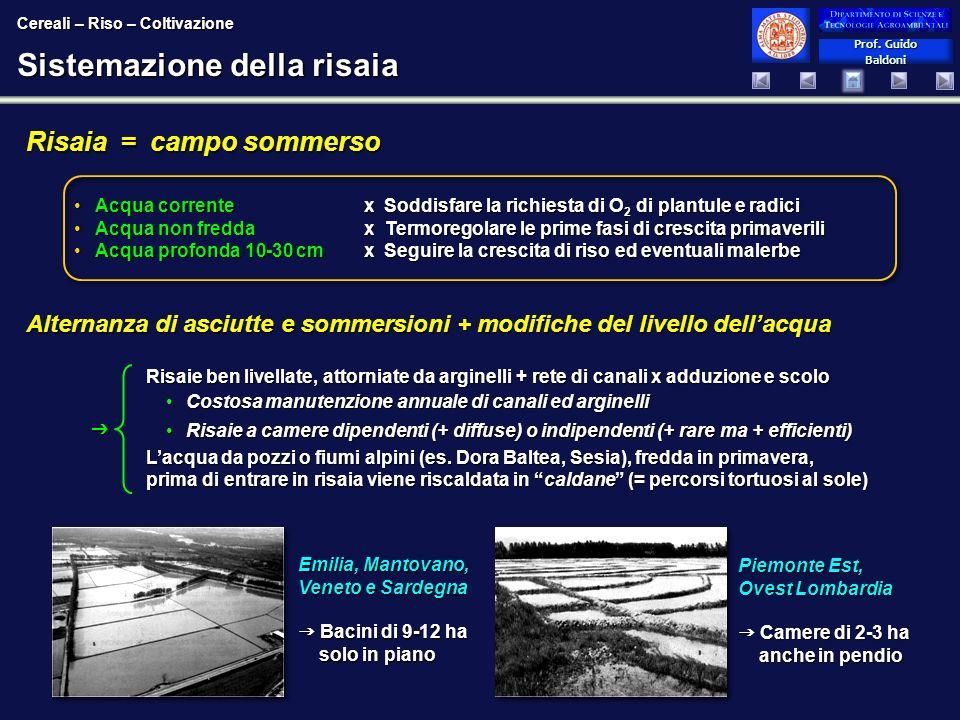 Prof. Guido Baldoni Prof. Guido Baldoni Sistemazione della risaia Risaie ben livellate, attorniate da arginelli + rete di canali x adduzione e scolo C