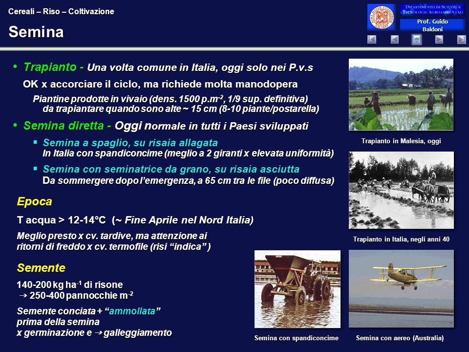 Prof. Guido Baldoni Prof. Guido BaldoniSemina Trapianto - Una volta comune in Italia, oggi solo nei P.v.s Trapianto - Una volta comune in Italia, oggi