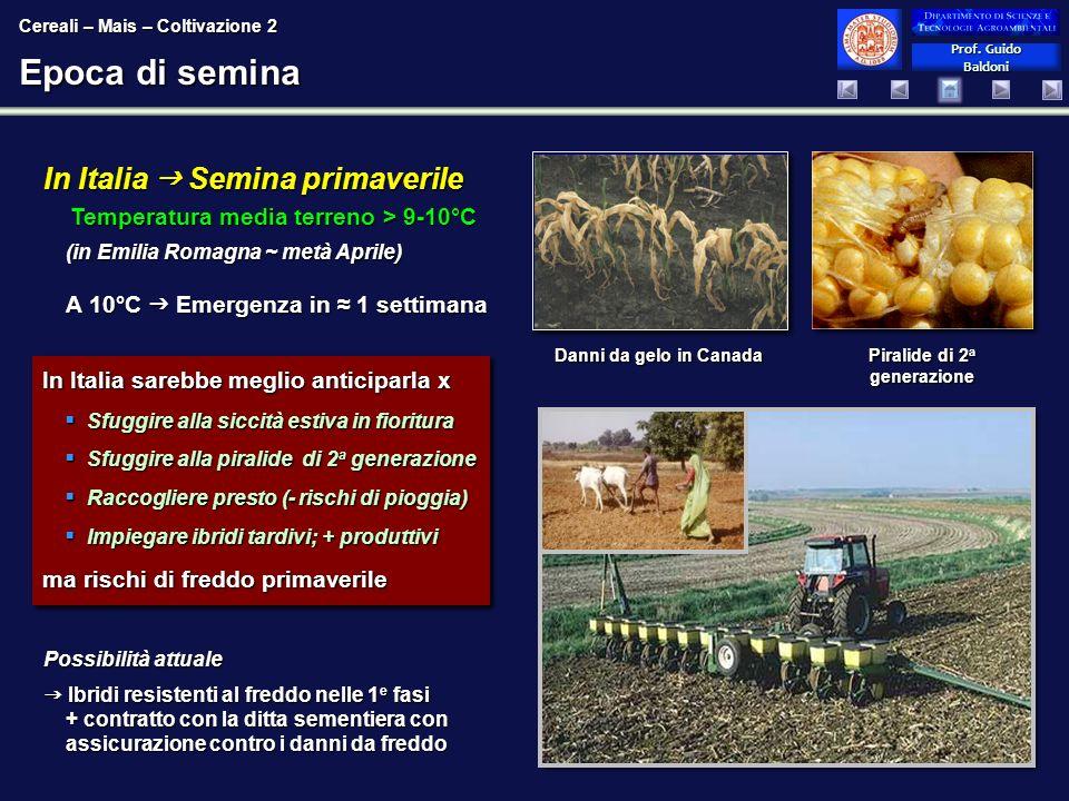 Prof. Guido Baldoni Prof. Guido Baldoni Epoca di semina In Italia Semina primaverile Temperatura media terreno > 9-10°C (in Emilia Romagna ~ metà Apri