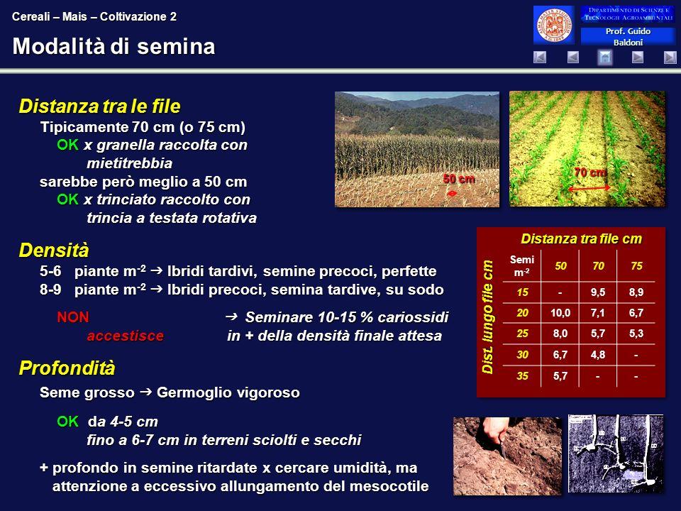 Prof. Guido Baldoni Prof. Guido Baldoni Modalità di semina Distanza tra le file Tipicamente 70 cm (o 75 cm) OK x granella raccolta con mietitrebbia sa