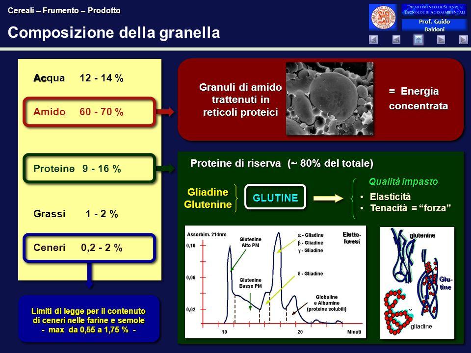 Prof. Guido Baldoni Prof. Guido Baldoni Ac Acqua12 - 14 % Amido60 - 70 % Proteine9 - 16 % Grassi1 - 2 % Ceneri0,2 - 2 % Ac Acqua12 - 14 % Amido60 - 70