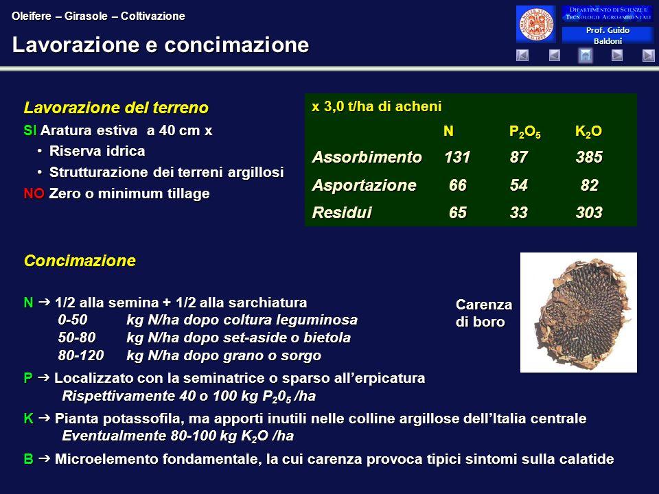 Prof. Guido Baldoni Prof. Guido Baldoni Lavorazione e concimazione Concimazione N 1/2 alla semina + 1/2 alla sarchiatura 0-50 kg N/ha dopo coltura leg