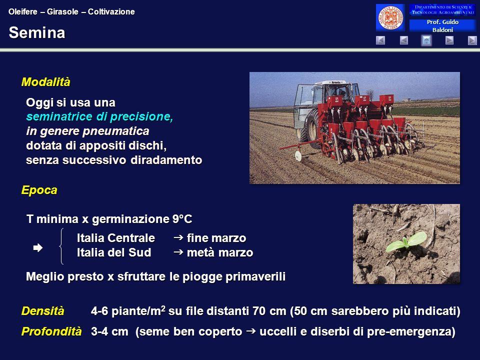 Prof. Guido Baldoni Prof. Guido BaldoniSemina Epoca T minima x germinazione 9°C Meglio presto x sfruttare le piogge primaverili Densità 4-6 piante/m 2