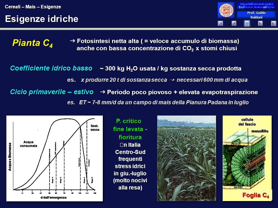 Prof.Guido Baldoni Prof. Guido Baldoni Esigenze idriche P.