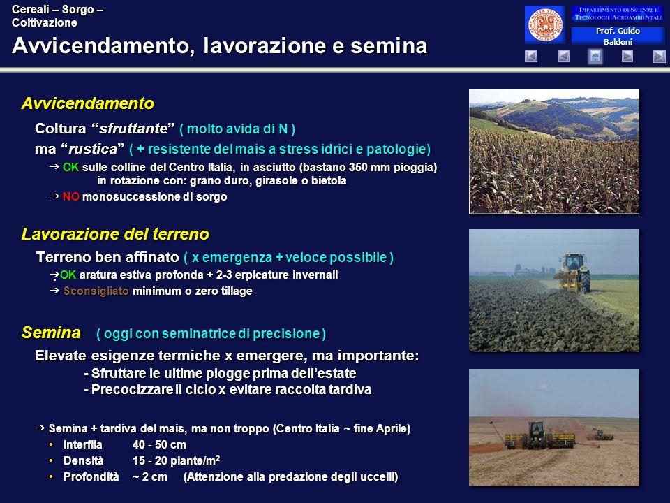 Prof. Guido Baldoni Prof. Guido Baldoni Avvicendamento, lavorazione e semina Lavorazione del terreno Terreno ben affinato ( x emergenza + veloce possi
