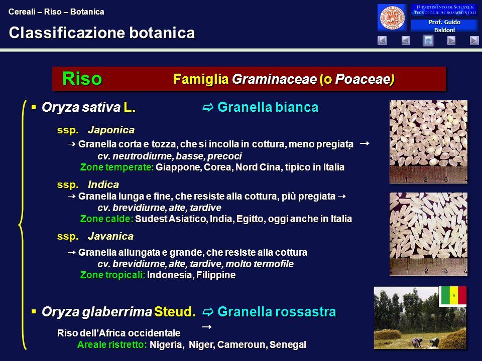 Prof. Guido Baldoni Prof. Guido Baldoni Classificazione botanica ssp. Japonica Granella corta e tozza, che si incolla in cottura, meno pregiata cv. ne