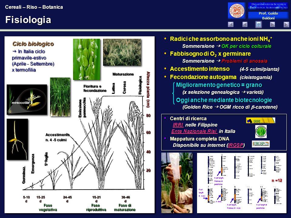 Prof. Guido Baldoni Prof. Guido BaldoniFisiologia Ciclo biologico In Italia ciclo primavile-estivo (Aprile - Settembre) x termofilia In Italia ciclo p
