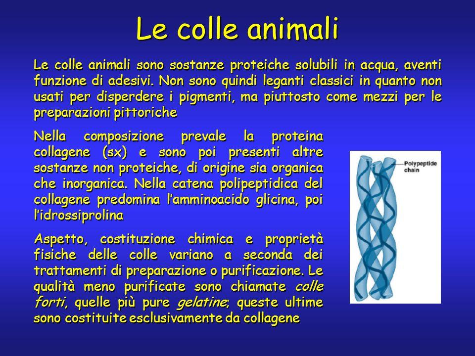 Le colle animali Le colle animali sono sostanze proteiche solubili in acqua, aventi funzione di adesivi. Non sono quindi leganti classici in quanto no