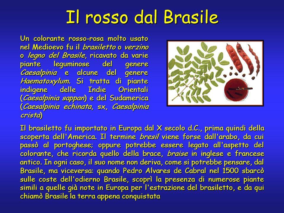 Il rosso dal Brasile Un colorante rosso-rosa molto usato nel Medioevo fu il brasiletto o verzino o legno del Brasile, ricavato da varie piante legumin