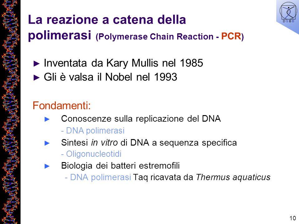 10 La reazione a catena della polimerasi (Polymerase Chain Reaction - PCR ) Inventata da Kary Mullis nel 1985 Gli è valsa il Nobel nel 1993 Fondamenti
