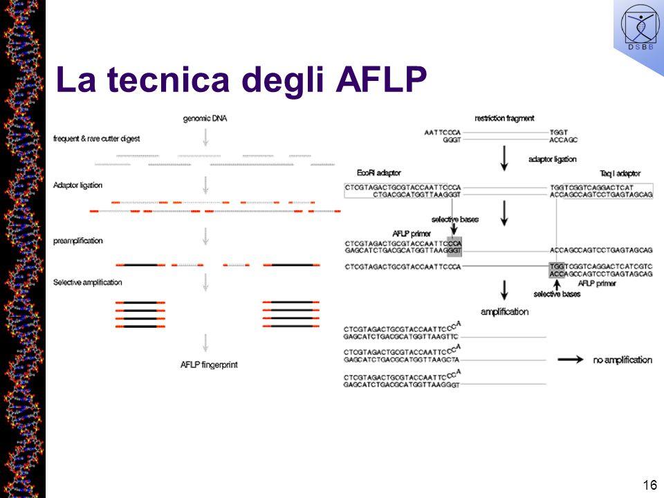 16 La tecnica degli AFLP