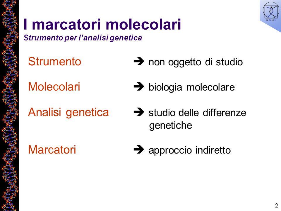2 I marcatori molecolari Strumento per lanalisi genetica Strumento non oggetto di studio Molecolari biologia molecolare Analisi genetica studio delle