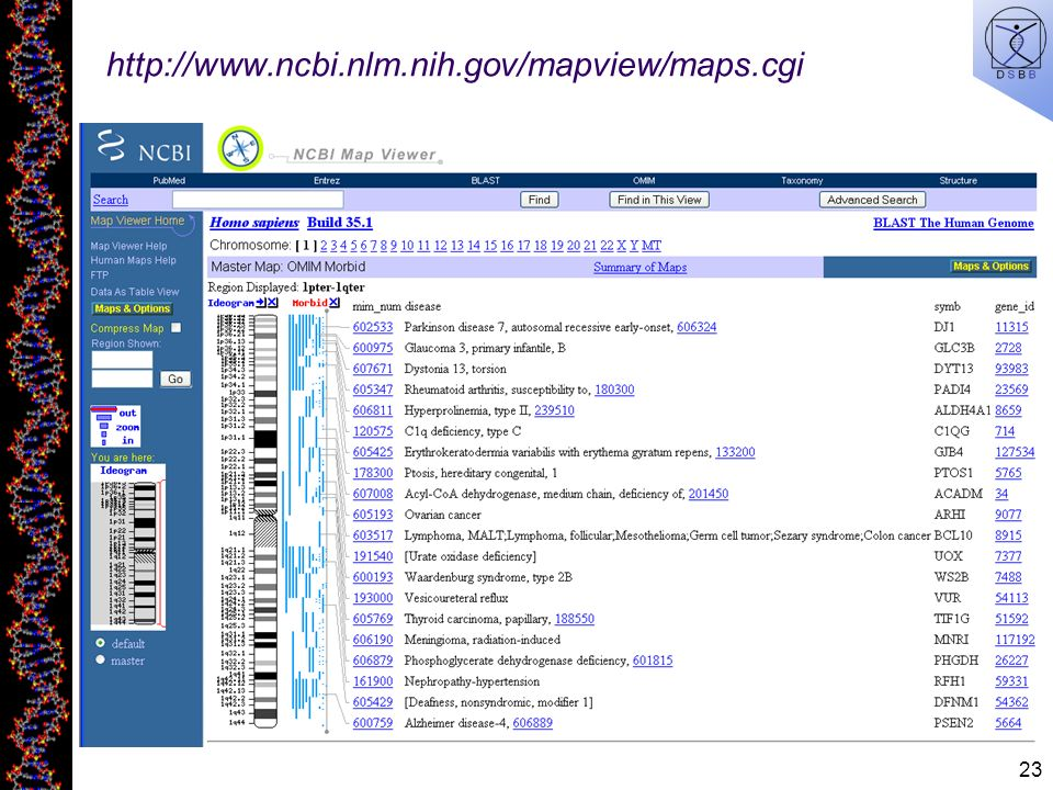 23 http://www.ncbi.nlm.nih.gov/mapview/maps.cgi