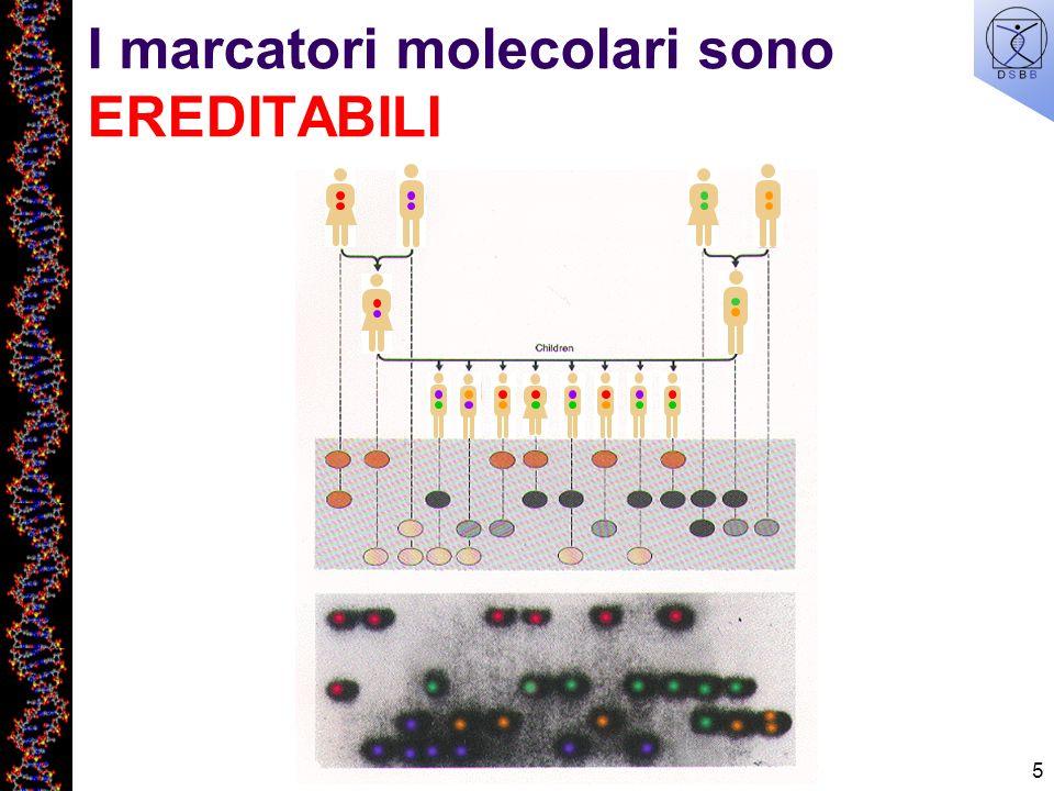 5 I marcatori molecolari sono EREDITABILI