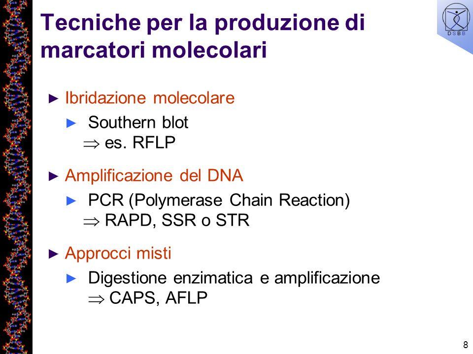 8 Tecniche per la produzione di marcatori molecolari Ibridazione molecolare Southern blot es. RFLP Amplificazione del DNA PCR (Polymerase Chain Reacti