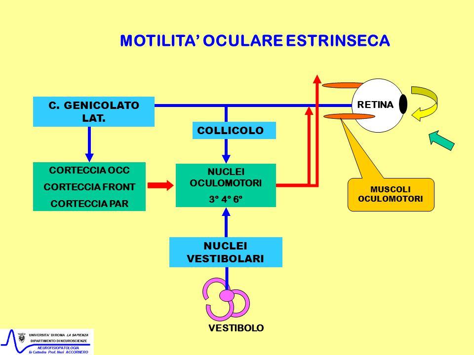 NUCLEI OCULOMOTORI 3° 4° 6° CORTECCIA OCC CORTECCIA FRONT CORTECCIA PAR MOTILITA OCULARE ESTRINSECA VESTIBOLO RETINA MUSCOLI OCULOMOTORI COLLICOLO C.