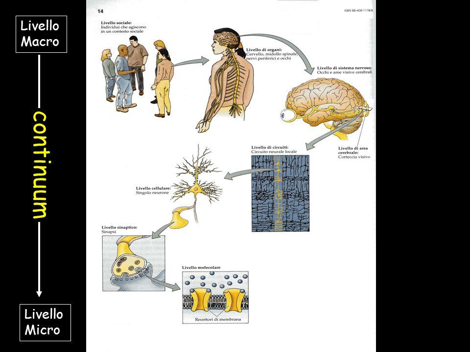 Livelli di analisi in neuropsicologia Livello Macro Livello Micro continuum