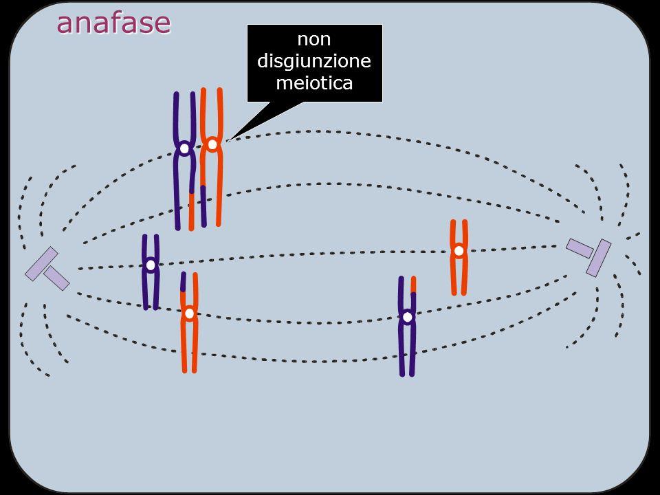 anafase non disgiunzione meiotica