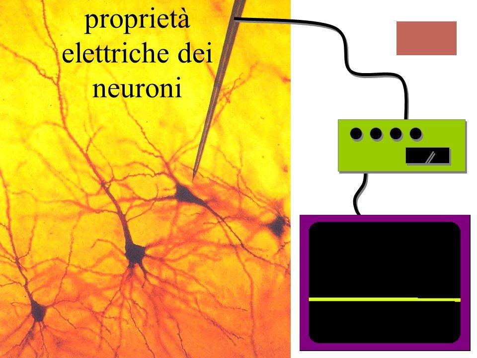 proprietà elettriche dei neuroni